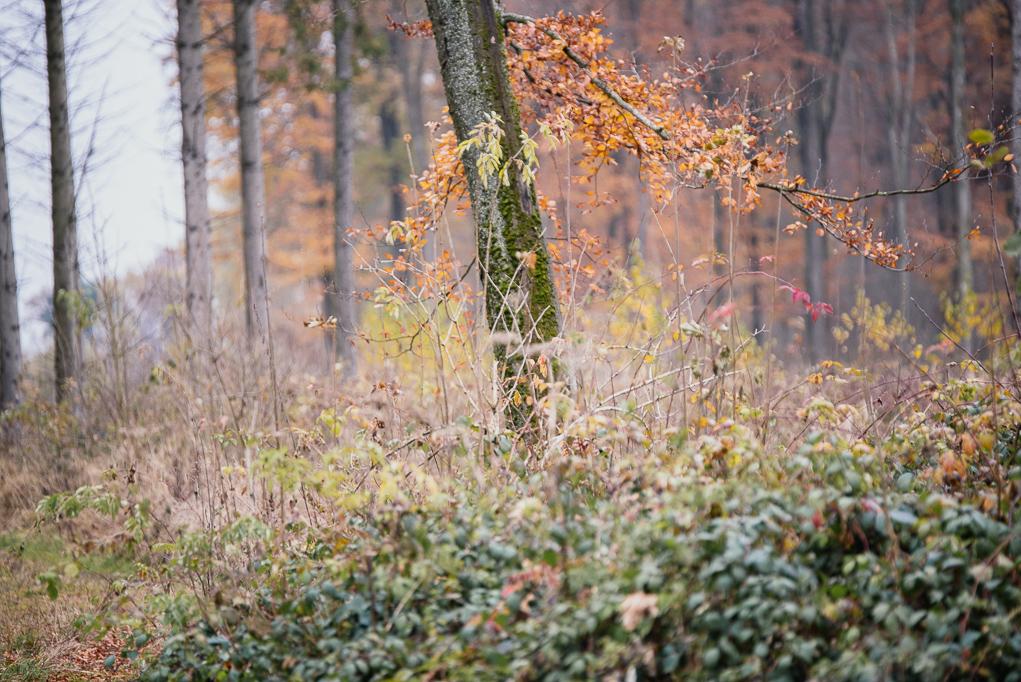 autumn-love-styled-shoot113