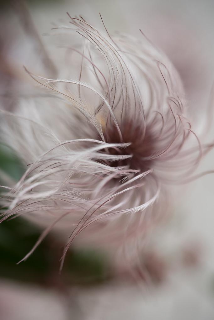 autumn-love-flowers004